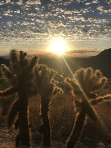 Sunset behind a cactus from Elite Retreat
